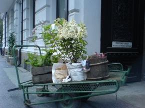 Utenfor kolonihagen kafe